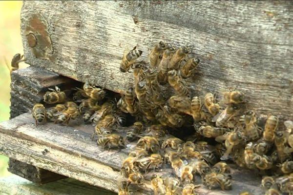 Journée mondiale des abeilles le lundi 20 mai