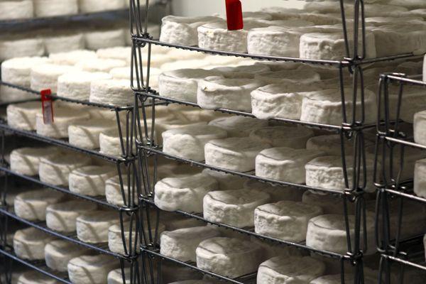 Les Français sont les plus gros consommateurs de fromages avec en moyenne une consommation de 26.2 kilos par an et par personne.