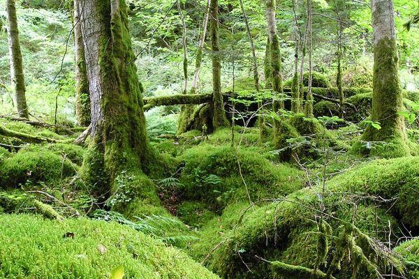 la forêt d'Algères recèle une biodiversité sans égale au niveau mondial selon la communauté scientifique