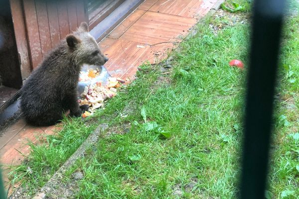 L'ourson Douillous dans son enclos