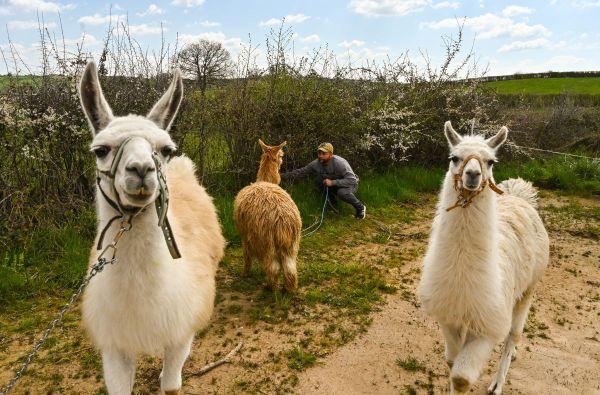 """Le """"Cirque Circus"""" et ses animaux sont coincés à Perrecy-les-Forges, en Saône-et-Loire, à cause du confinement imposé depuis le 17 mars 2020 pour enrayer l'épidémie de coronavirus COVID-19."""