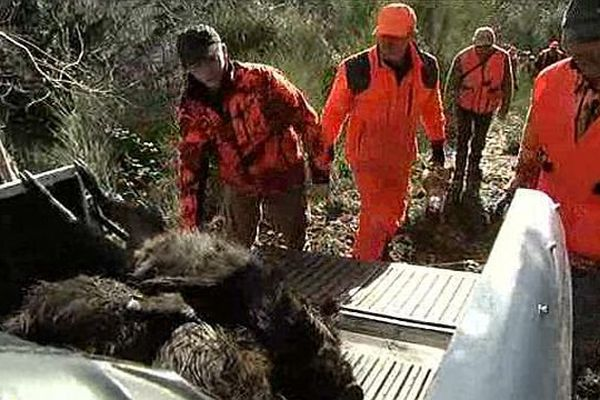 Les battues restent l'unique moyen de réguler la population de sangliers en Lozère.