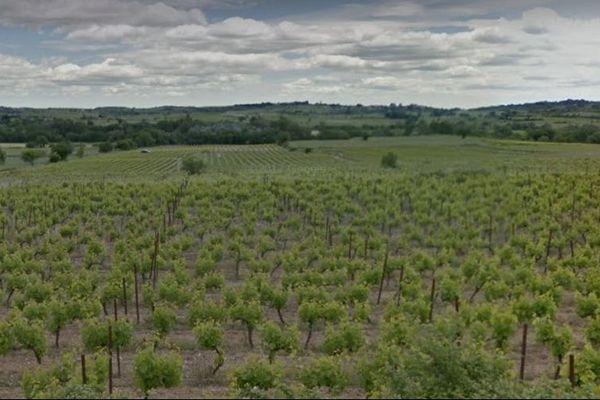 Vignes de Saint-Génies-de-Fontedit au nord de Béziers dans l'Hérault, dans le secteur touché par la grêle.