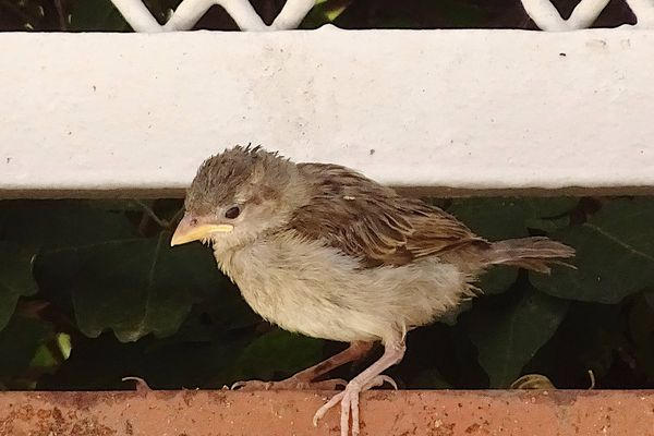 Les oiseaux des villes tirent mieux leur épingle du jeu