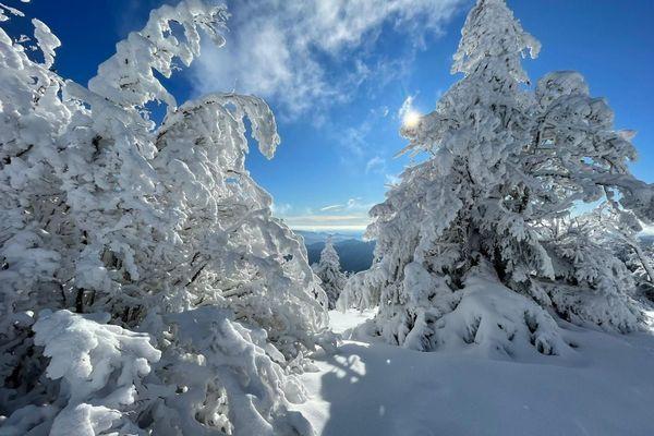 Sapins sous la neige au Mont Aigoual le 5 janvier 2021