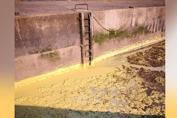 Charente-Maritime : un dépôt jaune et mousseux en bord de mer sur 1,5 km de long à Fouras