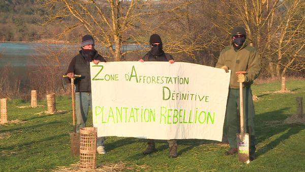Plantation rebellion plant trees