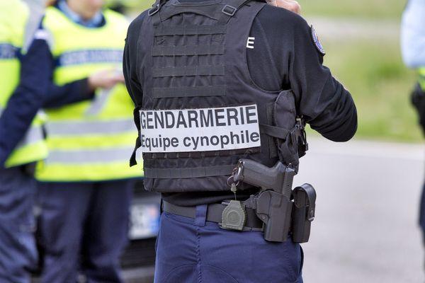 Une équipe cynophile a notamment été mobilisée pour retrouver Patrick Troupet, disparu près de Gien le 31 juillet. Photo d'illustration