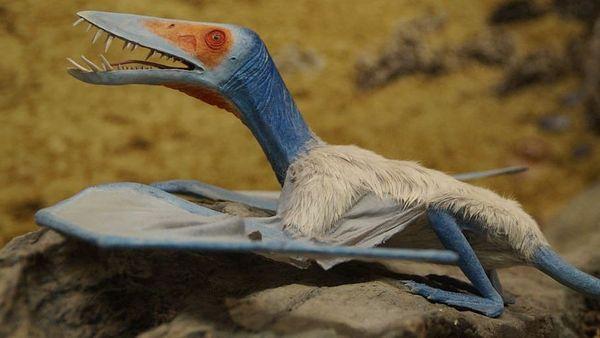 """Le ptérosaure """"Rhamphorhynchoïde"""""""