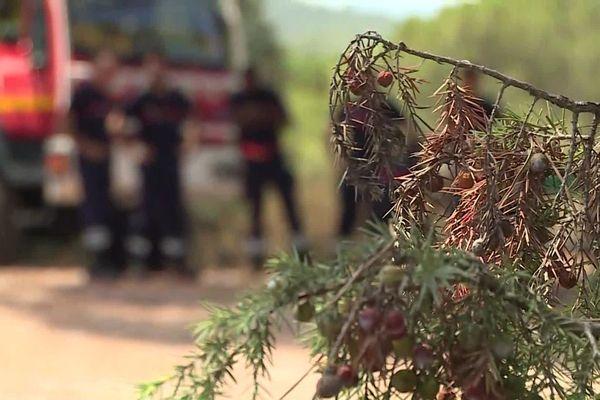 Ce lundi 3 août, le massif forestier des Monts toulonnais est en risque incendie extrême.