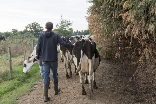 Un agriculteur dans une exploitation laitière à Heric (Loire-Atlantique)