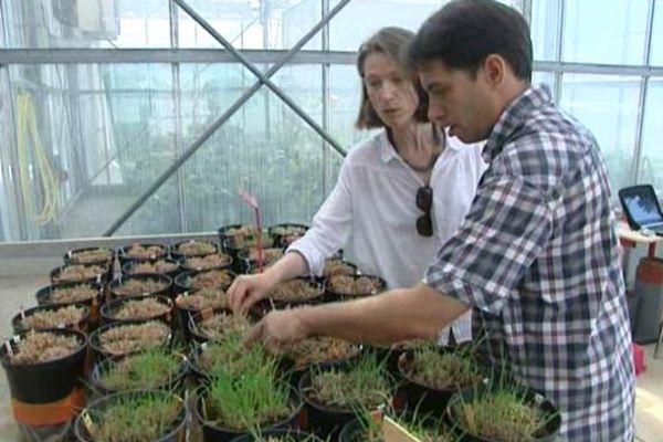Dans une serre de Montpellier, Cyrille étudie avec Florence Volaire la résistance des plantes à la sécheresse.