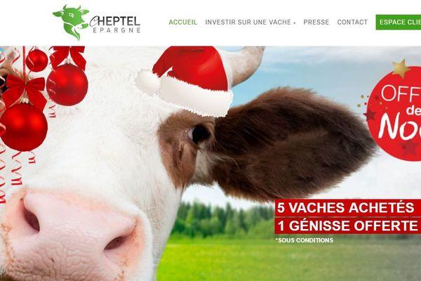 Ce site d'épargne vous propose d'investir dans des vaches laitières, mais c'est une arnaque.