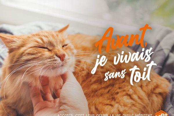 62 refuges proposent des animaux à adopter en France.