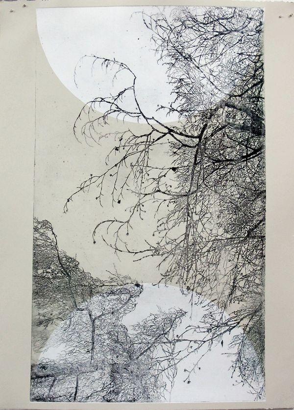 Le hêtre pourpre de la pépinière, gravure de Sarah Monnier