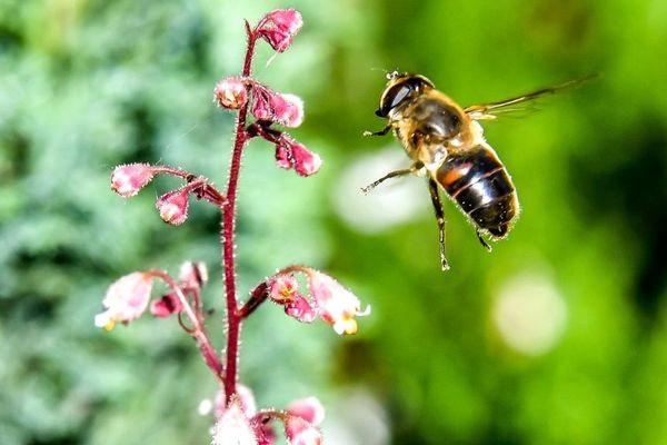 Le sulfoxaflor, composant des produits Transform et Closer, fait partie de la famille des néonicotinoïdes, des insecticides affectant le système nerveux central des abeilles.