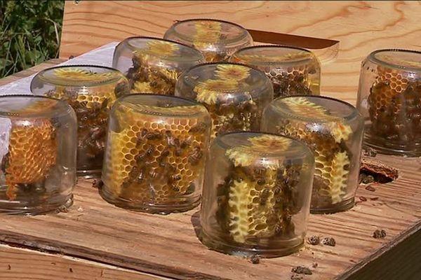 Les abeilles au travail dans les pots des apiculteurs réunis de Monts-sur-Guesnes dans la Vienne.