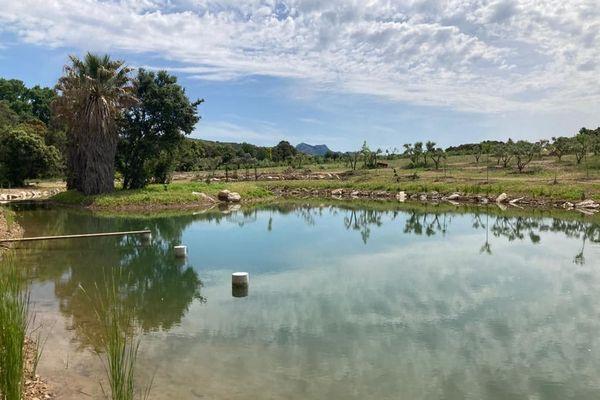 Dans la ferme du domaine du temps perdu à Mouriès, les poissons servent à nourrir les plantes grâce au système de l'aquaponie.