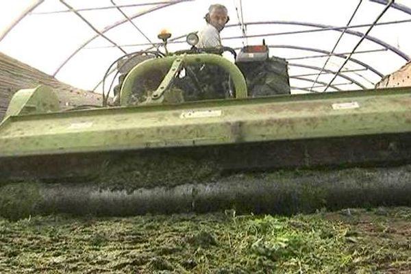 En décembre 2015, les producteurs du Roussillon ont écrasé des milliers de pieds de salades produits à perte.