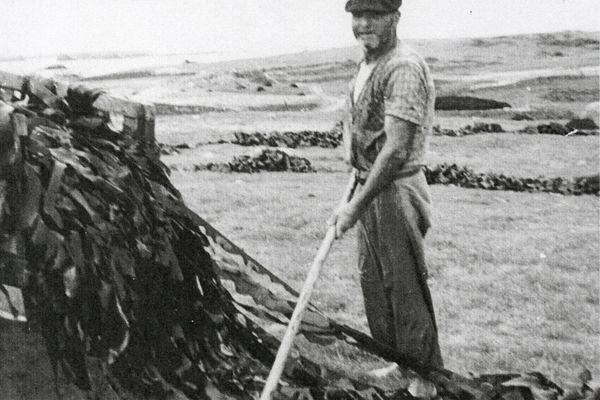 Job Bodénès, dit Chob ar Mare, beau-père d'Yves Bramoullé, décharge sa charretée de laminaires sur l'île Lédénès de Molène, dans les années 1960.