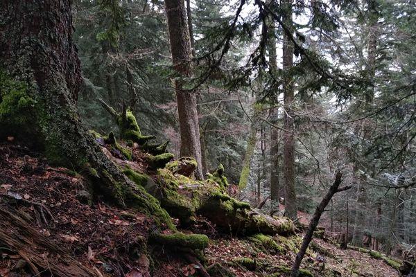 Avec le projet Sylvae, le Conservatoire d'Espaces Naturels souhaite préserver la biodiversité des forêts anciennes.