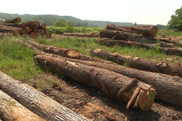 Pyrénées- Les importations massives de chêne par la Chine créent une pénurie et une inflation très préoccupante pour l'économie locale. juin 2021.