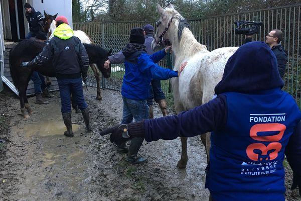 106 chevaux en détresse ont été sauvés en Vendée le 22 janvier 2018