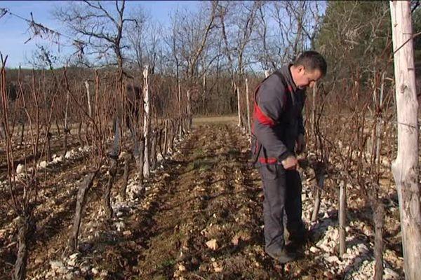 Maurin Beranger, vigneron à Cahors, profite de l'hiver pour tailler ses vignes.