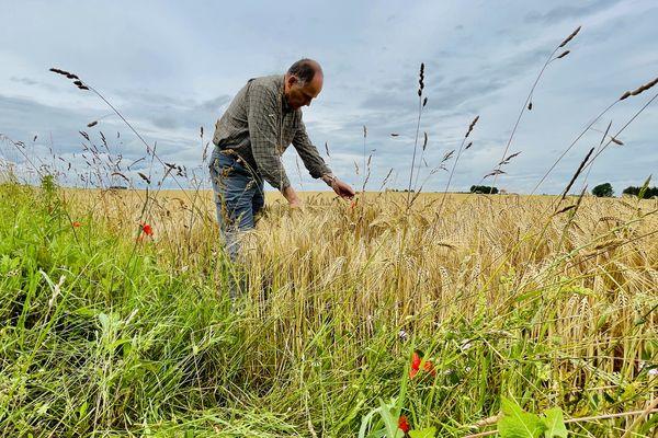 Alain Grethen sur sa parcelle d'orge d'hiver constate le taux d'humidité trop important pour commencer la récolte