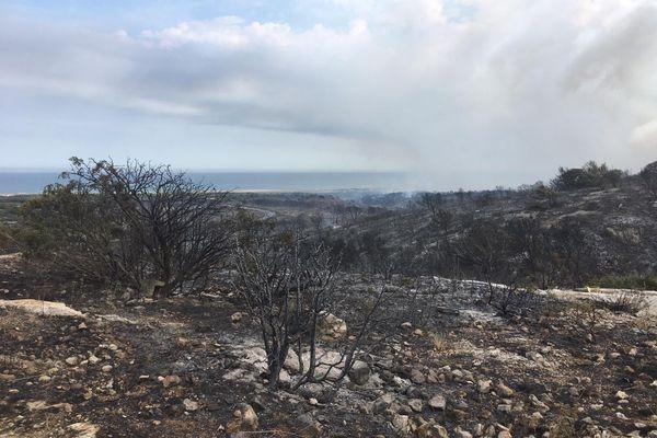 Trois cents hectares de pinède ont brûlé dans le massif de la Clape (Aude) samedi 3 juillet.