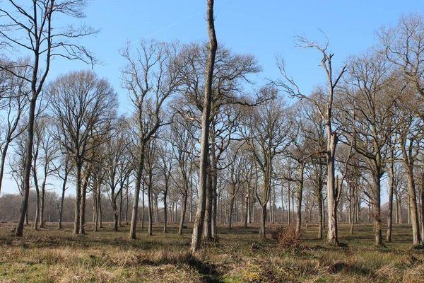 Première étape : le sous-bois est exploité ; ne restent que les semenciers. Mais la mise à nu brutale des sols, l'oxydation des éléments nutritifs empêchent la régénération naturelle.