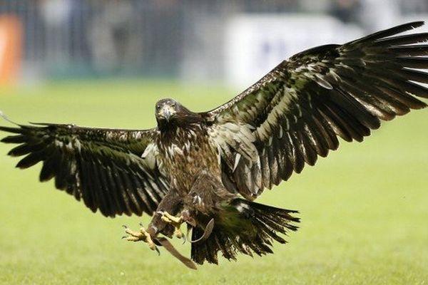 L'aigle du club, Messi prendra son envol avant le début du match.