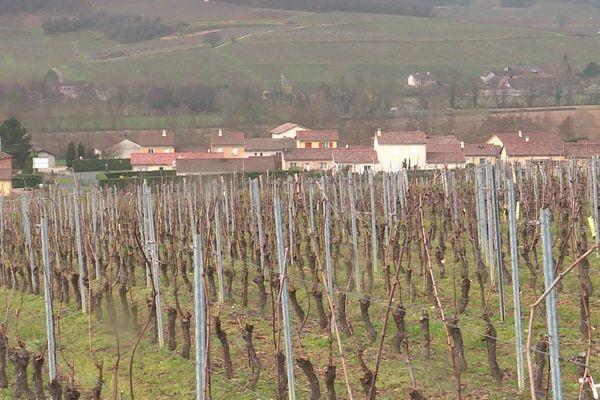ARCHIVES. Des vignes à Tournus.
