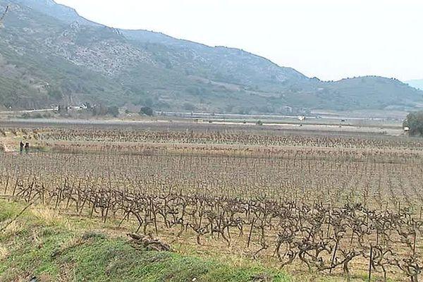 Cases-de-Pène (Pyrénées-Orientales) - les vignes du Roussillon convoitées par les producteurs de cognac - 2017.