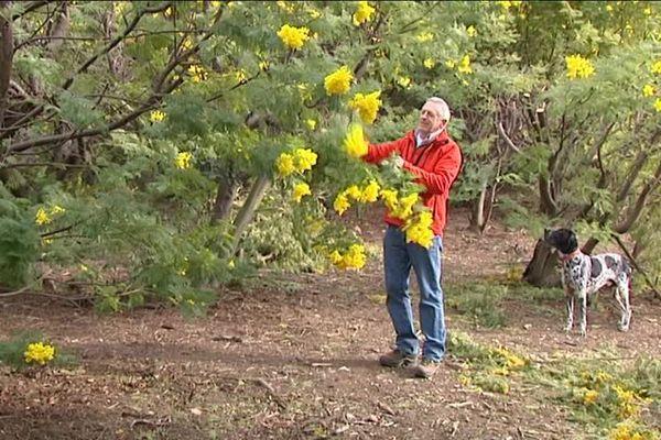 Bernard Vial reproduit des gestes séculaires pour couper les fleurs