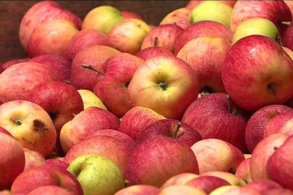 Récoltera-t-on beaucoup de pommes cette année ?