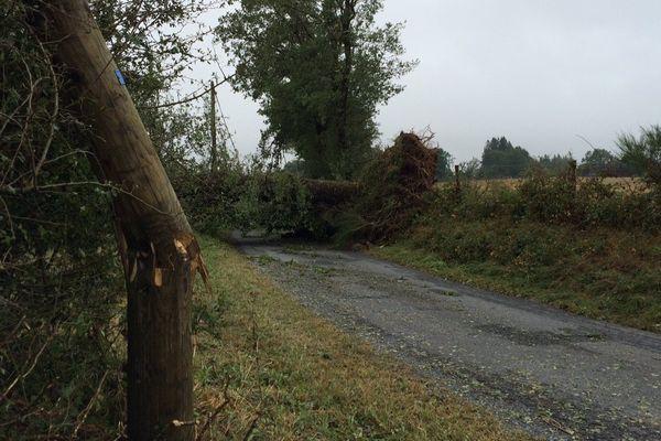 Des arbres, parfois centaines, sont tombés sur la route à Salles-Curan (Aveyron). Les fils téléphoniques sont tombés avec.