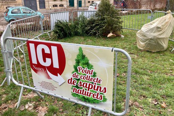 Depuis le lundi 28 décembre, la Ville de Nancy organise des collectes de sapins de Noël.