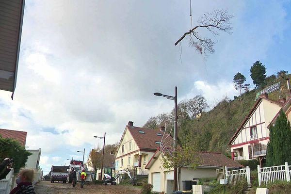 Les arbres élagués sont descendus lentement avec une grue et survolent les maisons.