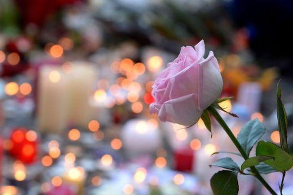 Une rose déposée en hommage aux victimes des attentats de Paris, devant le Bataclan le 15 novembre 2015.