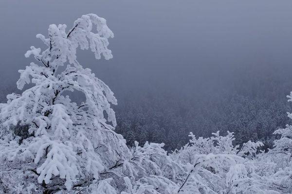 Les chutes de neige depuis le mois de décembre en Auvergne ont été exceptionnelles. Du jamais-vu depuis des années, parole d'Auvergnats. Alors vous êtes nombreux à prendre en photo cette neige dans la région pour immortaliser ces moments. En voici un petit aperçu.