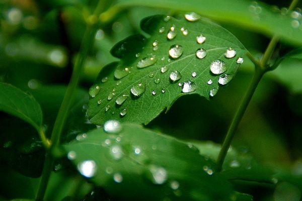 Un temps pluvieux au sud