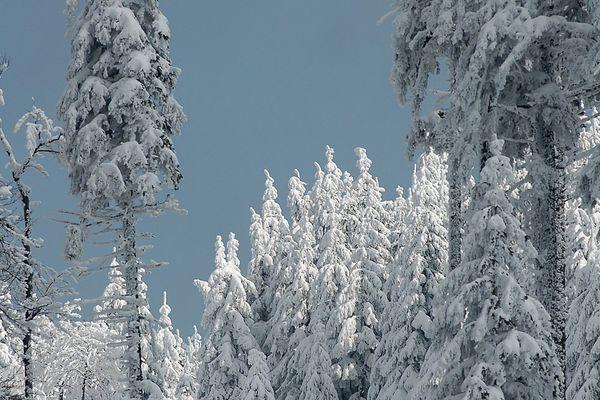 Le champ du feu sous la neige