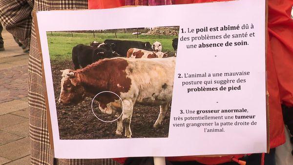 La pancarte d'une manifestante présente samedi 9 janvier devant la Préfecture, à Lille.