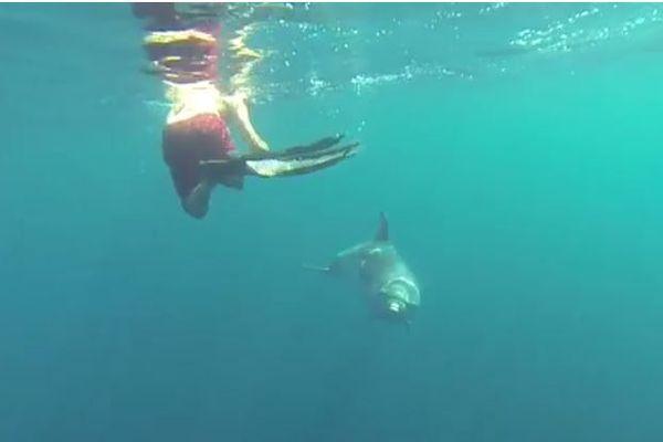 A Agay, ce dauphin joue avec les baigneurs.