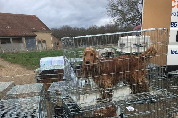 En tout ce sont 38 chiens et 20 chiots berger allemand, cocker et setter gordon qui ont dû être placés en urgence.