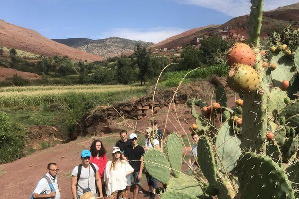 Une randonnée dans la montagne berbère pour découvrir et cueillir des fruits sauvages
