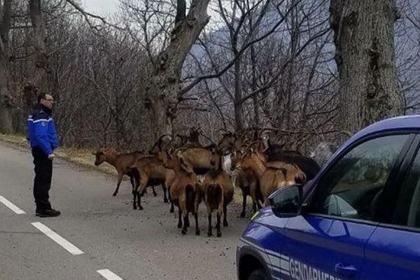 """Les gendarmes de Lozère ont de l'humour et ils le prouvent après l'annonce par le site Le Gorafi d'une """"immense rave-party"""" en Lozère réunissant 40 chèvres."""
