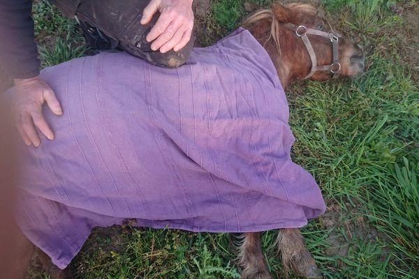 Le petit poney sauvé par Julie Nicolas et de précieuses aides