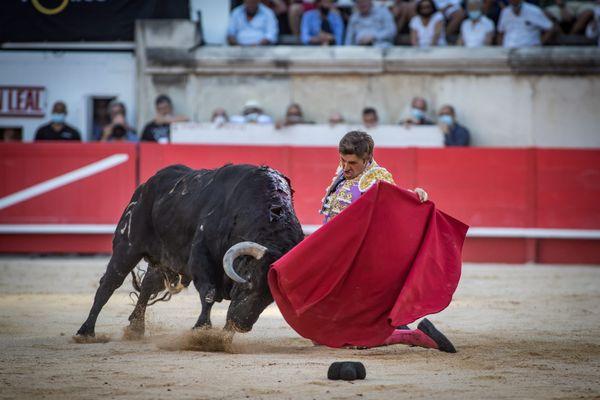 La feria des vendanges se tiendra du 16 au 19 septembre prochains à Nîmes. Six spectacles dont quatre corridas, une à cheval et une novillada sont programmés.